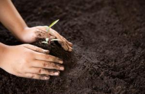 Importancia de cuidar el medio ambiente en nuestro colegio